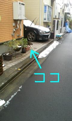 guruguruusi-2010-02-02N.JPG